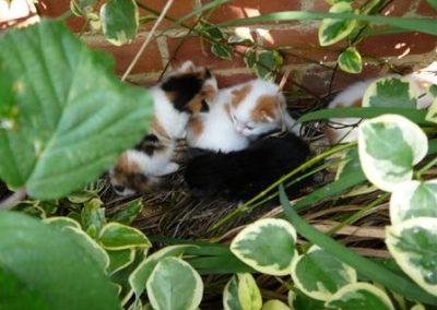 four_kittens-1